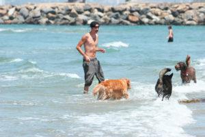 Sonnenschutz für Hunde gegen Sonnenbrand