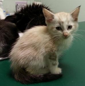 Kranke Katzen ohne Schutzimpfung