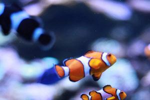 Fische sind ideale Haustiere für Senioren