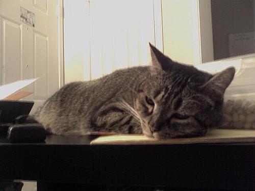 geschwächte Katze bei Durchfall