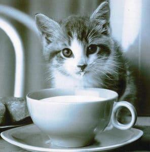 Milch kann bei Katzen mit Laktoseintoleranz zu Durchfall führen