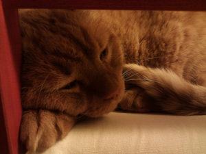 Durchfall bei Katzen
