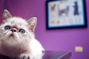 Der Impfplan Katzen schützt vor schweren Erkrankungen