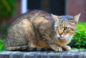 Die Borreliose bei Katzen ist selten