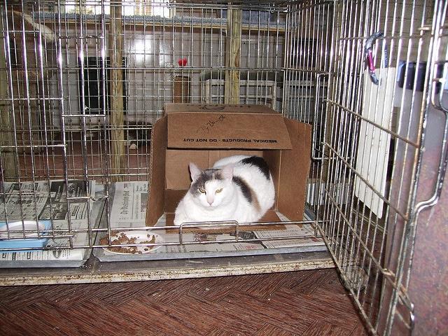 Behandlung der Katze in Tierklinik bei Blasenentzündung