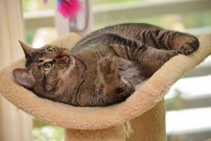 Meningitis, Meningoenzephalitis, Meningomyelitis bei Katzen