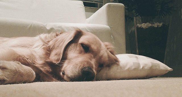 Überwachungskamera für den Hund – den besten Freund nie aus dem Auge verlieren