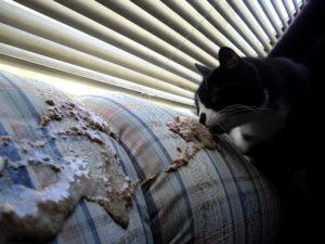 Katze frisst Erbrochenes