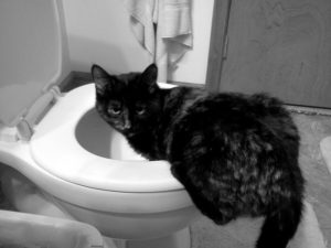 Zahlreiche Ursachen für Chronisches Erbrechen der Katze