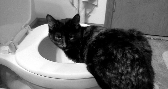 Chronisches Erbrechen der Katze