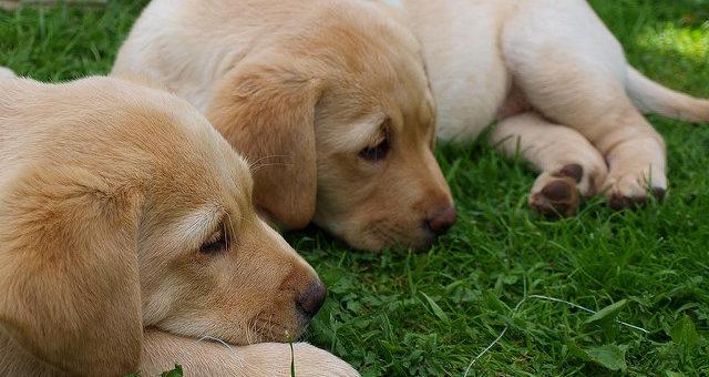 Stadien der Hundeentwicklung