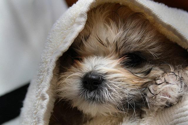 Hundeseife gut ausspülen und dann abtrocknen