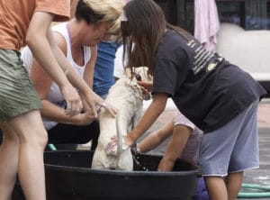 Hund baden mit Hundeseife