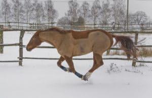 gesundes älteres Pferd im Winter