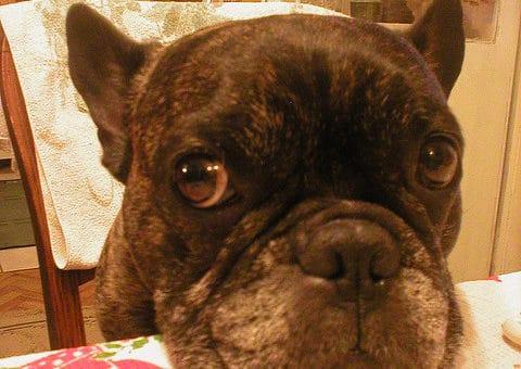 So stellen Sie sicher, dass Ihr selbstgemachtes Hundefutter die richtigen Nährstoffe liefert