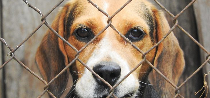 Zwingertraining für Welpen und erwachsene Hunde