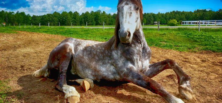 Pyrrolurie beim Pferd – Eine fast vergessene Stoffwechselerkrankung