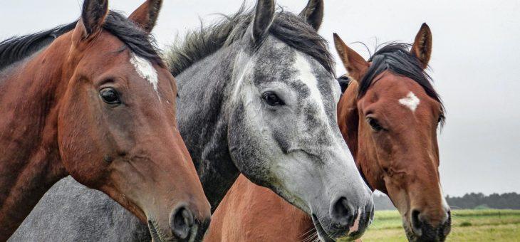 Pferde online verkaufen? Tipps & Tricks