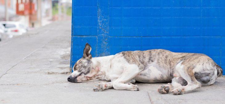 Erbrechen beim Hund: Ursachen und Therapie