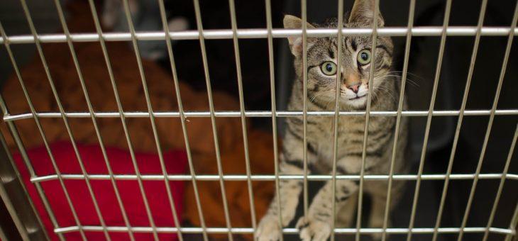 Was sind veterinärmedizinische zusammengesetzte Medikamente?