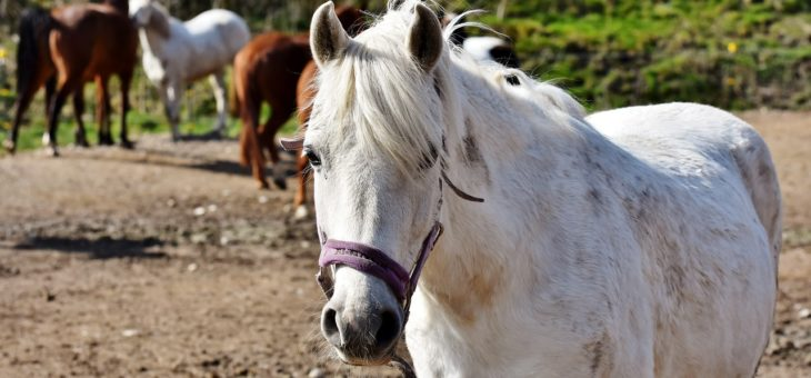 Was brauche ich, um ein Pferd zu halten?
