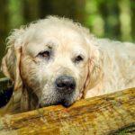 Signale von einem kranken Hund erkennen