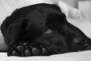 Versicherungen für Ihr Haustier